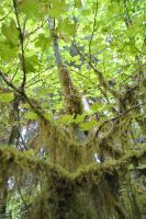 Moss 3 by wolfstockphotos