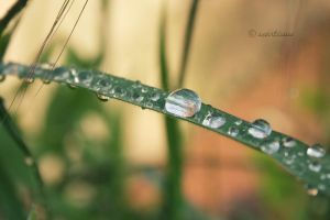 Drops. by ScarTissue92