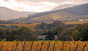 Vineyards of Alsace by floflo