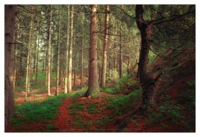 Into the woods by Pajunen