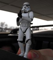 Keeping Watch from the Sunroof by Detdre