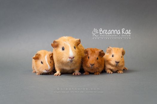 Piggy Family by breanna-rae