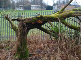 Broken Tree Stock by Lucy-Stock