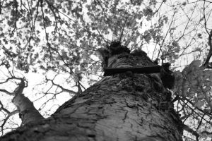 Up Tree by TheEnglishSummer