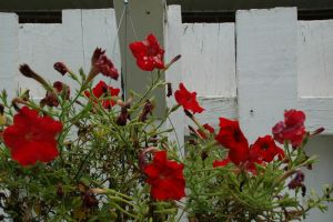 Red Flowers by Fiction-Art-Author