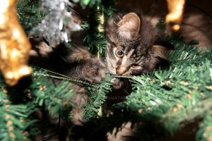 Christmas kitten by camillalie
