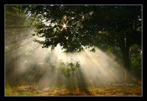 Broceliande by Yeoman2b