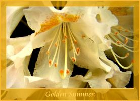 golden summer by Beresah