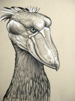 Shoebill Stork by HouseofChabrier