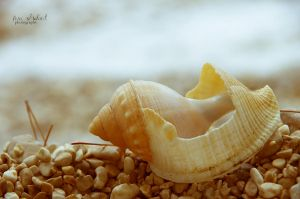 seashell. by seasfairytale