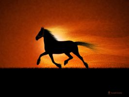The Running Horse by vladstudio