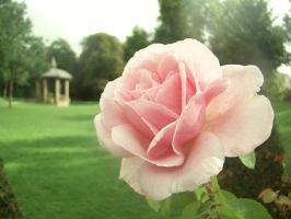 Back to the rose garden by TheSwanDive