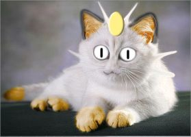 Real Meowth by Chribity