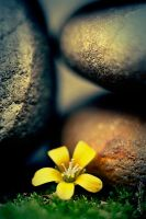 Little yellow flower by sourcow