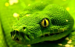 Green snake close-up by Jessica-Devourer