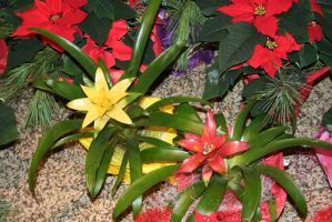 flowers at christmastime 2 by ingeline-art