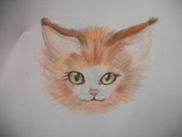 Orange cat colour sketch by LizardonEievui13