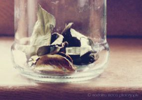 Dried leaves by pepytta