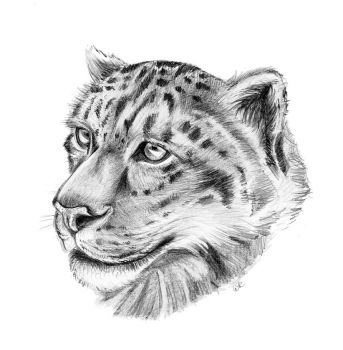 Snow Leopard by Mimose91