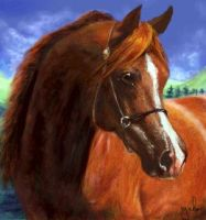 Chestnut Arabian by oomu