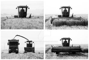Harvest in 4 simple steps by geostant