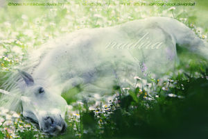 Dreaming in Peaceful Slumber by s3ilver
