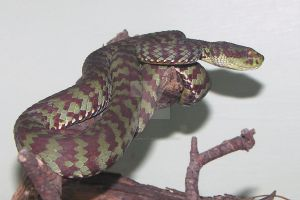 Kanburian Pit Viper by ManitouWolf