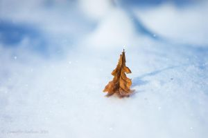 Leaf in the Snow by lecristoph