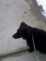Blackie Out On His Walk4 by Shippudenpro28