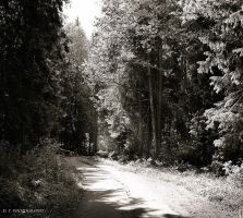 Road in the forest by orlibraorli