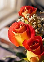 Roses by aheria