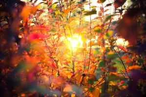 autumn sun_3 by Se1fDestruct
