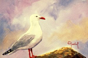 Red Bill Gull by Wildfire47