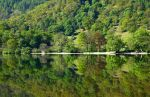 Grasmere reflections by scotto