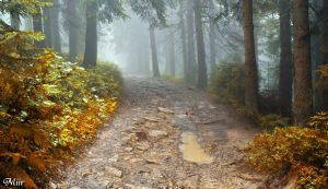 Autumn road in the fog by miirex