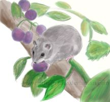 grape eating rodent by imFragrance