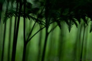 Lost Within The Fern Forest by nivaun