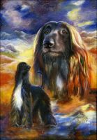 Mountain hunter. AfghanHound by alartstudio