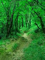 Stock|Through the green forest by Sugar-Sugar-Bee