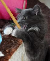 Loki And Her Magic Wand by Forestina-Fotos