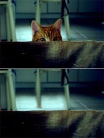 playing hide and seek by miniaturedisasters