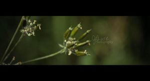 Will Blossom Some Day by JDLuxe