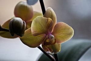 Nature pure 41 - ORCHIDs by cmg2901