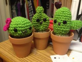 Cute cacti by Kuro-Mizuo