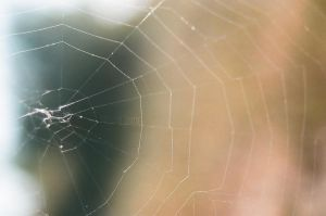 Spider Silk by MaddLouise