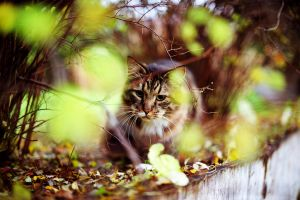 My Neighbor's Cat 4 by SmileyG