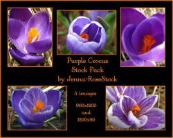 Purple Crocus Pack by Jenna-RoseStock