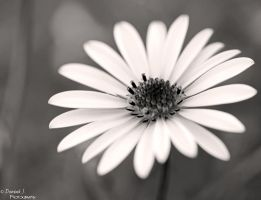 .Soft by DominikJPhotography
