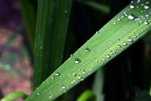 Waterdrops on a leaf ( updated version ) by UdoChristmann