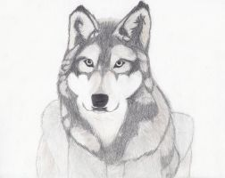 Wolf_2 by seyrii